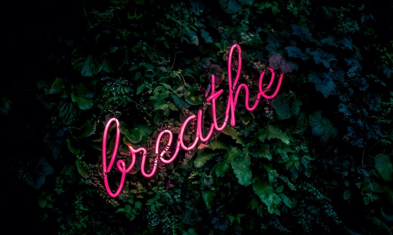 """The word """"breathe"""" in neon against a background of green leaves."""