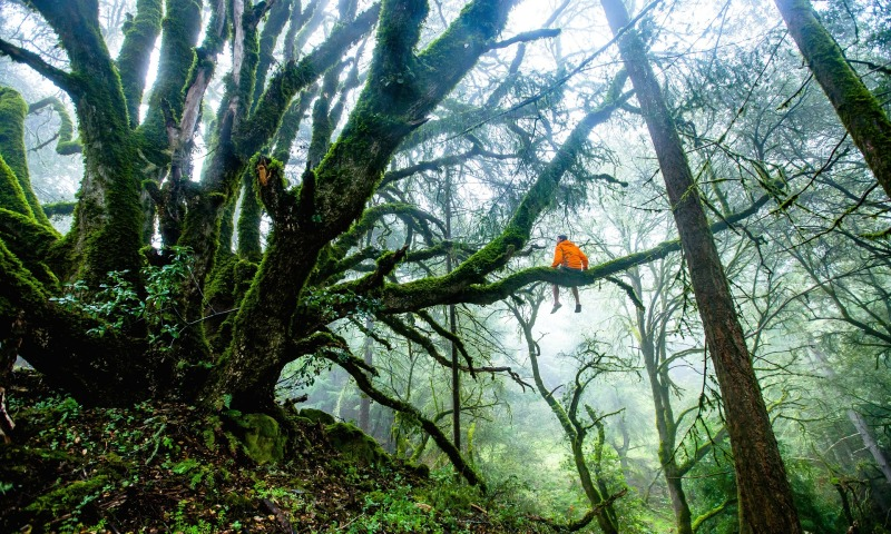 A person relaxes in a beautiful forest